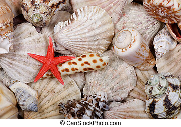 Shellfish background - Starfish and shell fish close up...