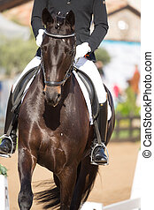 Spanish Horse - Beautiful Spanish horse color in outdoor...