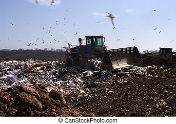 Landfill with birds