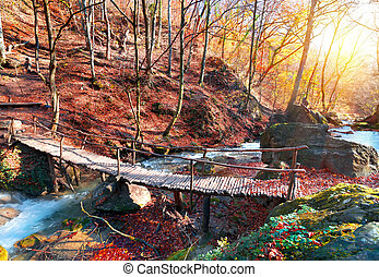Bridge in the forest - Wooden bridge in the mountain forest...