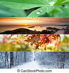 Four Seasons Collage - Four seasons concept with leaves,...