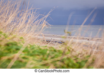 beautiful landscape dunes baltic sea in autumn winter grass...