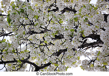 Blossoming spring branches with flowers Photo background for...