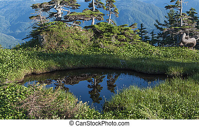 Natural pool in mountains - Reflections of pines in water of...