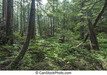 Southeast Alaska forest - Diverse vegetation in pine forest...