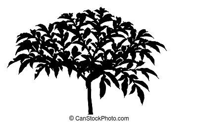plant eating illustrationen und clip art plant. Black Bedroom Furniture Sets. Home Design Ideas