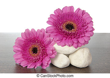 White rocks pink Gerberas on wood - Stack of white stones...