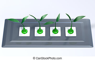 Small plants plugged in a support panel - four green plugs...