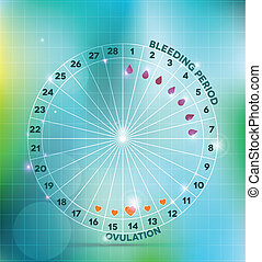Menstrual cycle wheel. Average menstrual cycle. Bleeding...