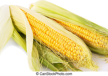 Corn cobs isolated on white background.