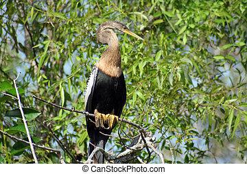 Everglades Bird #1 - Big bird found on everglades in florida