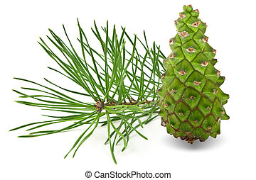 Pine Cone - The pine needles and pine cone on a white...