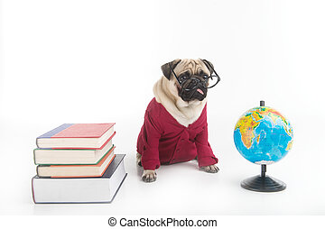 Smart dog Funny dog in glasses and red clothing sitting near...