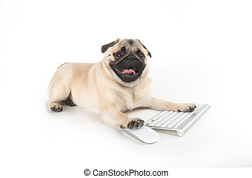 Dog with computer keyboard. Funny dog using computer...