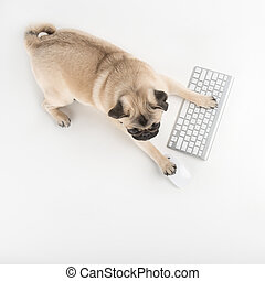 Dog with computer keyboard. Top view of funny dog using...
