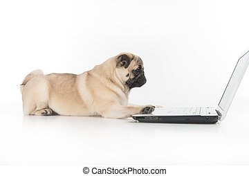 Dog working at the computer. Side view of funny dog using...