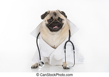 Doctor Dog. Funny dog in white lab coat and stethoscope...