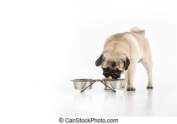 Dog eating. Funny little dog eating from the food bowl while...