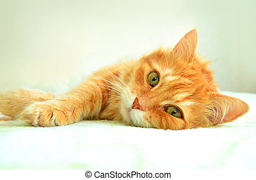 The portrait of red cat on a white background