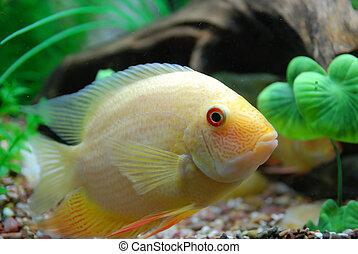 Tropical fish - Beautiful tropical fish on the deep sea