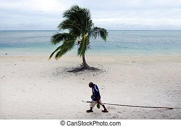 Coconut Tree Agriculture in Aitutaki Lagoon Cook Islands -...