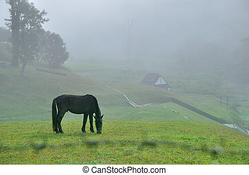 Black horse eating grass field amidst fog in morning