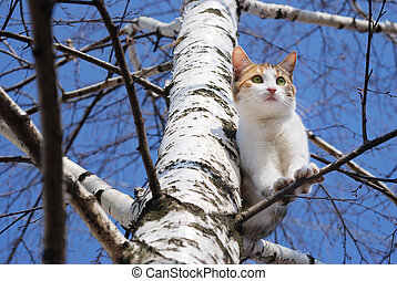 Cat on tree - A cat on a tree looking down.