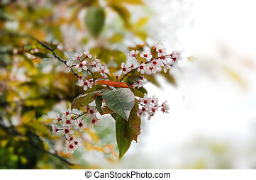 Spring flowers on a branch