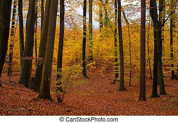 otoño, bosque
