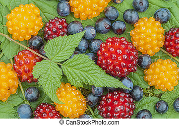 Wild Alaskan berries - Closeup of assortment of wild...