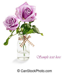 Purple roses isolated on white background - Beautiful purple...