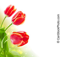Spring background with tulips (shallow DOF)