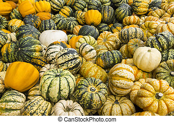 Green-White and Yellow-White Striped Pumpkins - Yellow,...