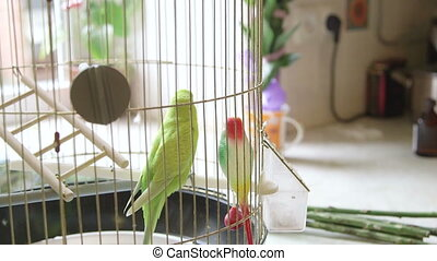 Budgie And Plastic Friend In The Cage