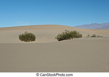 Stovepipe Wells Sand Dunes