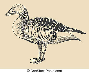 ink drawing of bird duck, Anser anser I am author of this...