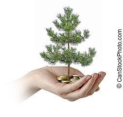 Palm with a pine tree growng from pile of coins