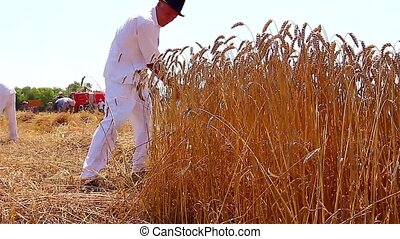 Farmer cutting wheat