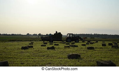 farmer harvest hay bale - farmers harvesting hay bales in...
