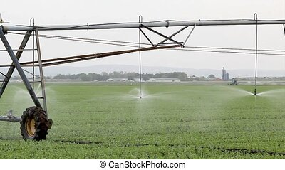 Pea field watering - Irrigation system for water supply in...