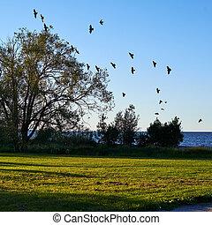 falka, repülés, fa, madarak