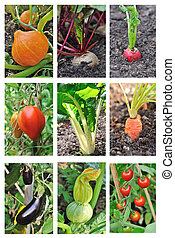 vegetables garden - board of different vegetables growing in...