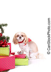 Small dog sitting by Christmas tree