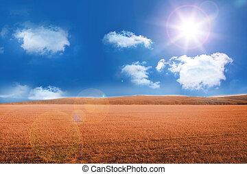 Sunny brown landscape