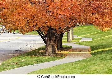 calçada, florescendo, pêra, árvores