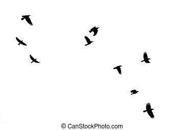 Flock of crows - The photography of flying crows, which were...