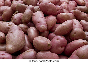Dsire potatoe - The Dsire is a red-skinned main crop potato...
