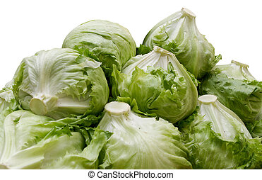Lettuce is an annual plant of the aster or sunflower family...