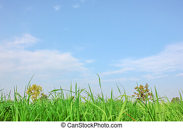 Field with blue sky