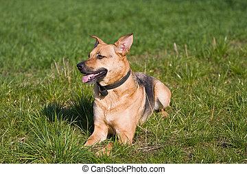 down in sunshine - dog lay down in grasland